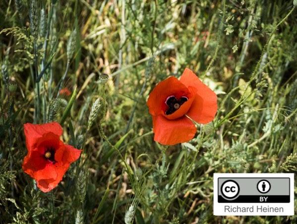 Blumen mit Lizenzhinweis im Bild