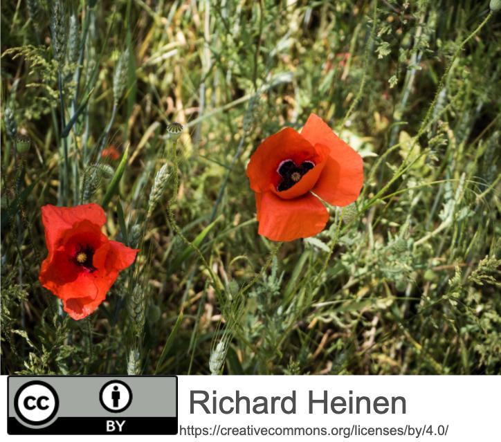 Blumen mit Lizenzhinweis als Bauchbinde unter dem Bild