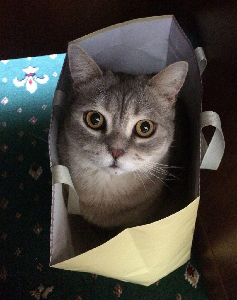 Die Katze im Sack (Foto unter CC0 via Pixabay-Nutzer AlPodgorny)