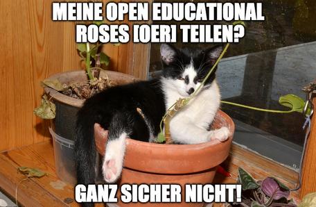 Open Cat Content  CC0. Bearbeitung als Meme von Gabi Fahrenkrog für OERinfo, immer noch CC0.