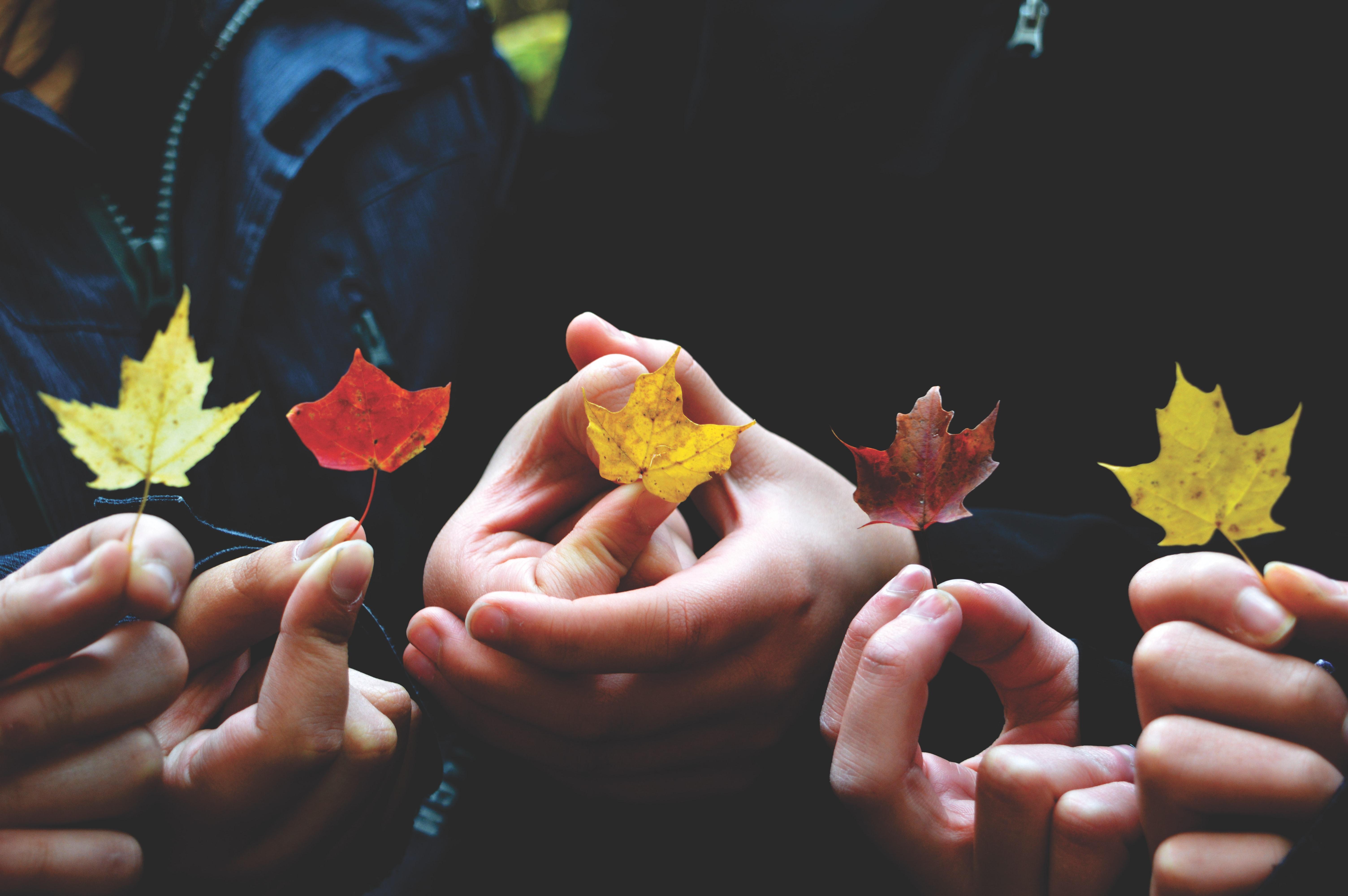 Hände halten Laubblätter, Foto von Providence Doucet bei Unsplash
